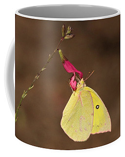 Clouded Sulphur Butterfly On Pink Wildflower Coffee Mug by Sheila Brown