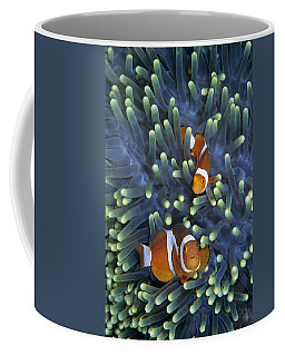 Clown Anemonefish Amphiprion Ocellaris Coffee Mug