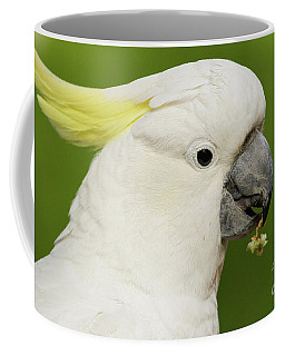Cockatoo Close Up Coffee Mug by Craig Dingle