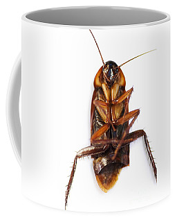 Cockroach Carcass Coffee Mug