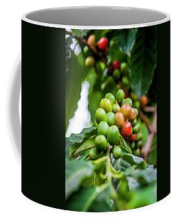 Coffee Plant Coffee Mug