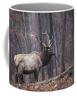 Chilly Misty Morning Coffee Mug by Andrea Silies