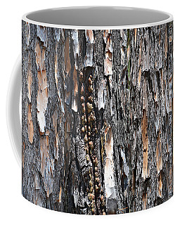 collage The Texture and Color of Pine Bark Coffee Mug
