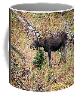 Colorado Cow Moose Coffee Mug