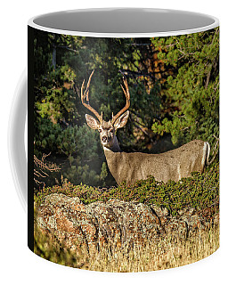 Colorado Mule Deer Buck Coffee Mug