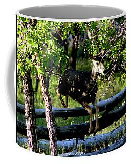 Colorado Mule Deer Jumping A Fense Coffee Mug