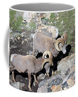 Colorado Rams Coffee Mug