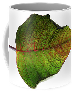 Colorful Autumn Leaf On White Background Coffee Mug