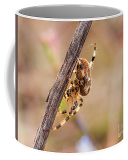 Colorful Spider Hanging From The Stick  Coffee Mug