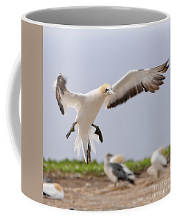Coffee Mug featuring the photograph Coming In To Land by Werner Padarin