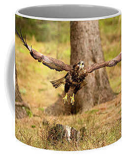 Common Buzzard Coffee Mug