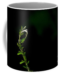 Common Chicory Coffee Mug