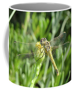 Red Veined Darter Dragonfly On Crete Coffee Mug