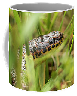 Common Rainbow Snake In The Grass Coffee Mug