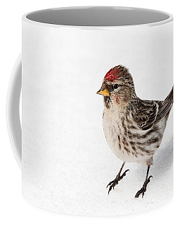 Coffee Mug featuring the photograph Common Redpoll- Sizerin Flamme - Acanthis Flammea by Nature and Wildlife Photography