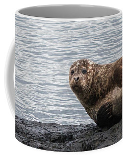 Common Seal Portrait Coffee Mug
