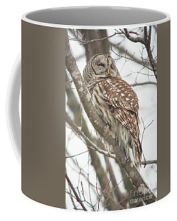 Contemplating Owl Coffee Mug by Cheryl Baxter