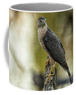 Cooper's Hawk Coffee Mug by Geraldine DeBoer