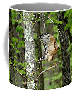 Coopers Hawk In New Hampshire Coffee Mug
