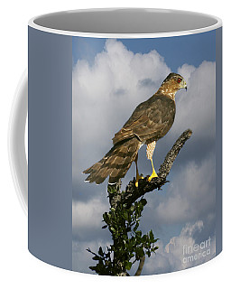 Cooper's Hawk On Watch Coffee Mug
