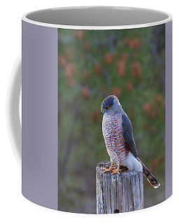 Coopers Hawk Perched Coffee Mug