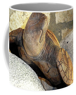 Coffee Mug featuring the photograph Coral And Turtle Decor by Francesca Mackenney
