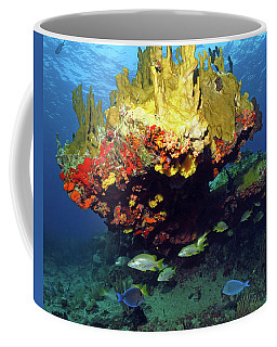 Coral Reef Scene, Calf Rock, Virgin Islands Coffee Mug