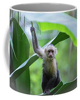 Costa Rica Monkeys 1 Coffee Mug