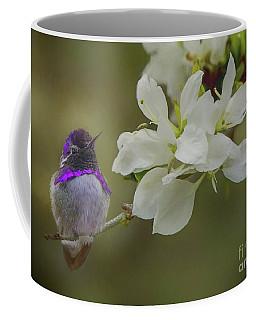 Costas Hummingbird On An Anacacho Orchid Branch Coffee Mug