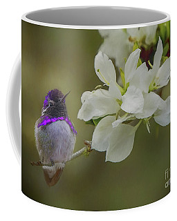 Costas Hummingbird On An Anacacho Orchid Branch Coffee Mug