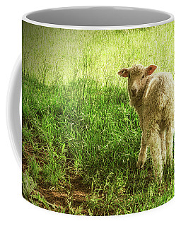 Cotswold Sheep Coffee Mug