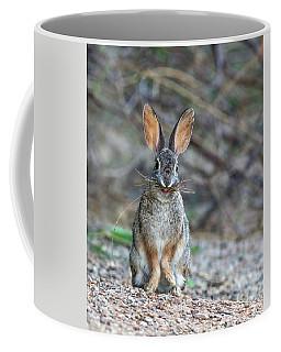 Cottontail Rabbit With Twigs 7278-042518-1cr Coffee Mug