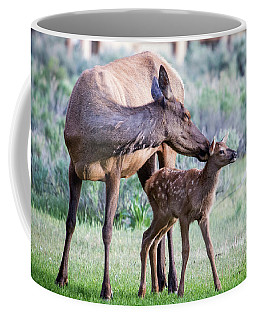 Cow And Calf Elk Coffee Mug