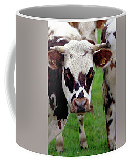 Cow Closeup Coffee Mug