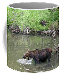 Coffee Mug featuring the photograph Cow Moose And Calf by James BO Insogna