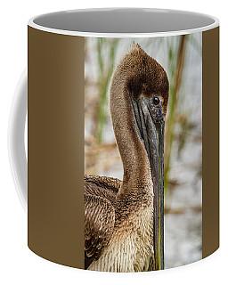 Coy Pelican Coffee Mug by Jean Noren
