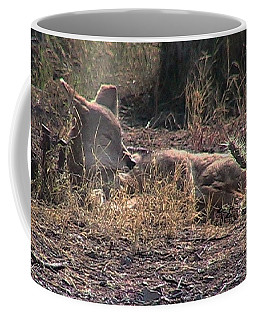 Resting Coyote Coffee Mug