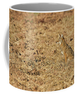 Coffee Mug featuring the photograph Coyote In Field by Bryan Keil