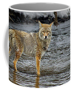 Coyote In The Madison River-signed-#0635 Coffee Mug