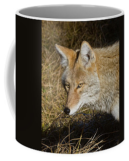 Coyote In The Wild Coffee Mug