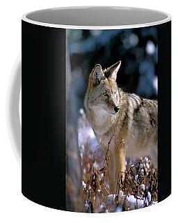 Coyote In Winter Light Coffee Mug