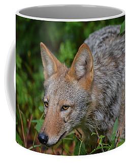 Coyote On The Hunt Coffee Mug