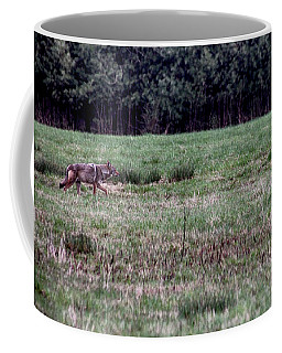 Coyote On The Prowl Coffee Mug