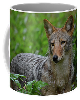 Coyote On The Prowl  Coffee Mug