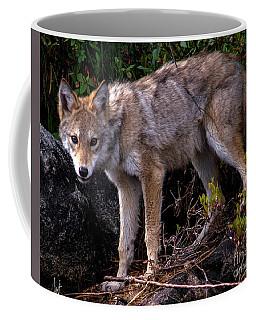 Coyote Portrait Coffee Mug