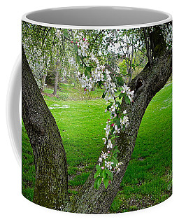 Crabapple Blossoms On A Rainy Spring Day Coffee Mug by Byron Varvarigos