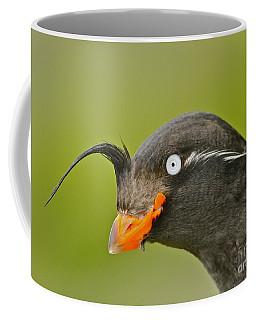 Crested Auklet Coffee Mug
