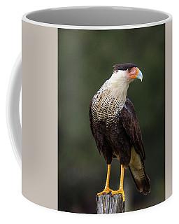 Crested Caracara Coffee Mug by Ronald Lutz