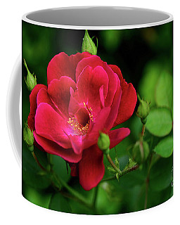 Coffee Mug featuring the photograph Crimson Red Rose By Kaye Menner by Kaye Menner