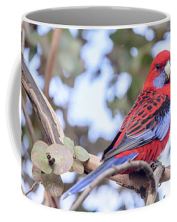 Crimson Rosella 03 Coffee Mug